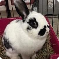 Adopt A Pet :: Biscotti - Woburn, MA