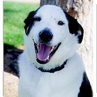 Adopt A Pet :: Po super family dog - Sacramento, CA