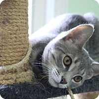 Adopt A Pet :: Buddy - Lindsay, ON