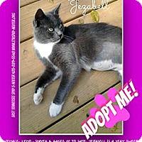 Adopt A Pet :: JEZZABELL - Bluff city, TN