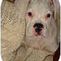 Adopt A Pet :: PICKLES - Sunderland, MA