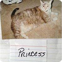Adopt A Pet :: Princess - Mobile, AL