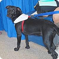 Adopt A Pet :: Chip - Minneola, FL