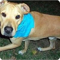 Adopt A Pet :: Chester - Orlando, FL