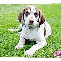Adopt A Pet :: Topher - Haverhill, MA
