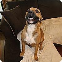 Adopt A Pet :: Lilly - ARDEN, NC