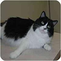 Adopt A Pet :: Amica - Phoenix, AZ