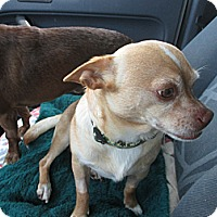 Adopt A Pet :: Loco - Apex, NC