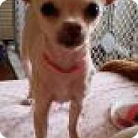 Adopt A Pet :: Mary Poppins - Phoenix, AZ