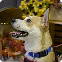 Adopt A Pet :: BENEDICT (BENNY) - Higley, AZ