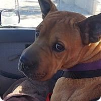 Adopt A Pet :: Freedom - Phoenix, AZ
