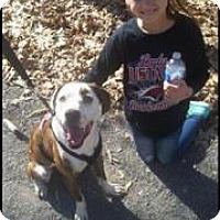 Adopt A Pet :: Henry - Bartlett, TN