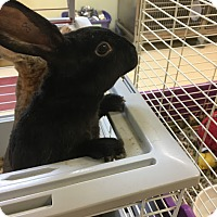 Adopt A Pet :: Thumper - Red Wing, MN