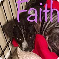 Adopt A Pet :: Faith - ROSENBERG, TX