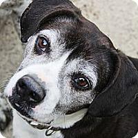 Adopt A Pet :: Gus - New Windsor, NY