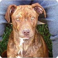 Adopt A Pet :: Missy - Irvington, KY