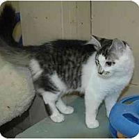 Adopt A Pet :: Juliet - Pendleton, OR