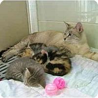 Adopt A Pet :: Manilla - Winter Haven, FL