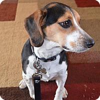 Adopt A Pet :: Jackson - Marietta, GA