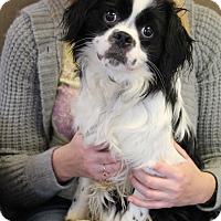 Adopt A Pet :: Gentry - Homewood, AL