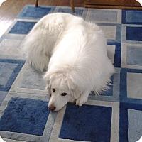 Adopt A Pet :: Luna ADOPTION PENDING - Bloomington, IL