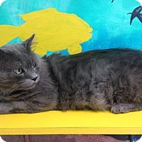 Adopt A Pet :: Stuart - Newport Beach, CA