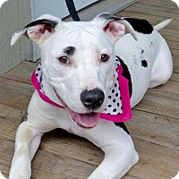 Adopt A Pet :: Olive - Baton Rouge, LA