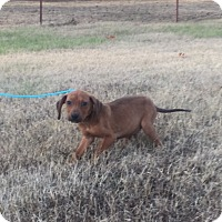 Adopt A Pet :: Rotini - Harmony, Glocester, RI