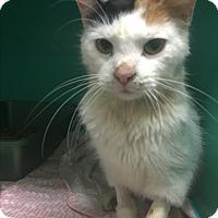 Adopt A Pet :: Skinny Minnie - Saylorsburg, PA