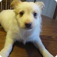 Adopt A Pet :: Grandma Willow - Racine, WI
