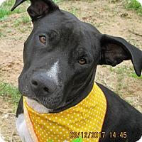 Adopt A Pet :: A - LAILLA - Raleigh, NC
