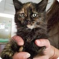 Adopt A Pet :: Toffee - Gadsden, AL
