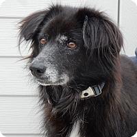 Adopt A Pet :: Posh - Long Beach, NY