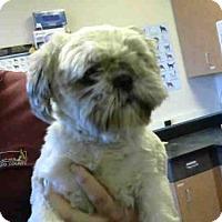 Adopt A Pet :: *MASON - Sacramento, CA