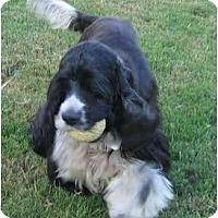 Adopt A Pet :: Willie - Sugarland, TX
