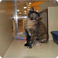 Adopt A Pet :: Jitterbug - Modesto, CA
