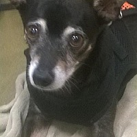 Adopt A Pet :: Jetson - Tucson, AZ