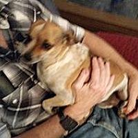 Adopt A Pet :: FRECKLES - TAHOKA, TX