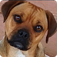 Adopt A Pet :: Jasmine - Carefree Little Girl - Plainfield, CT