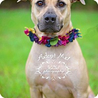 Adopt A Pet :: Tonya - Fort Valley, GA