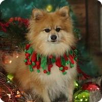 Adopt A Pet :: Cedric - Dallas, TX