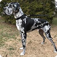Adopt A Pet :: Jaeger - Boonton, NJ