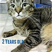 Adopt A Pet :: Isabelle - Pompton Plains, NJ