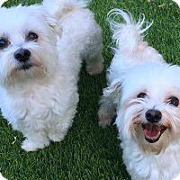 Adopt A Pet :: Buddy and Scrappy - Phoenix, AZ