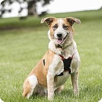 Adopt A Pet :: Ginger - Salt Lake City, UT