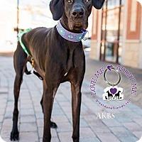 Adopt A Pet :: Seva - Huntersville, NC