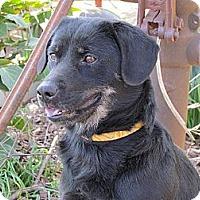 Adopt A Pet :: BELLA - Humboldt, TN