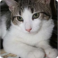 Adopt A Pet :: Rizzo - Frederick, MD