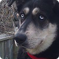 Adopt A Pet :: Bailey - Belleville, MI