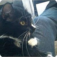Adopt A Pet :: Maxi - Sterling Hgts, MI